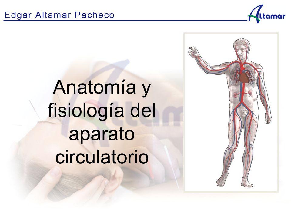 Lujo Capítulo 14 De La Anatomía Y Fisiología Patrón - Imágenes de ...