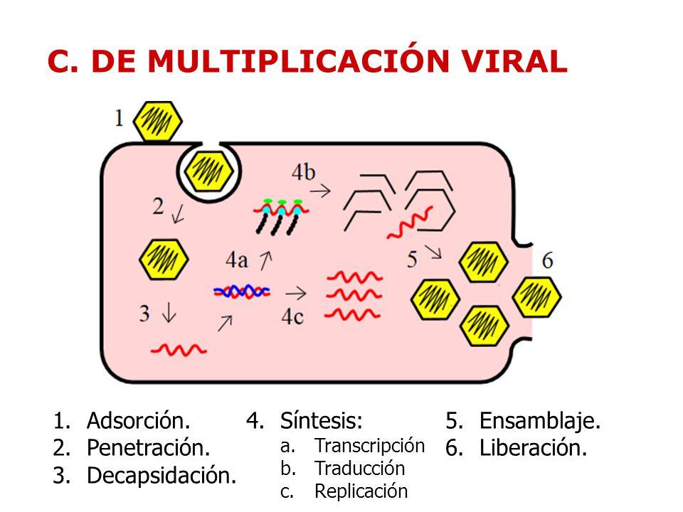 CARACTERÍSTICAS GENERALES DE LOS VIRUS.PRIONES. - ppt video online ...
