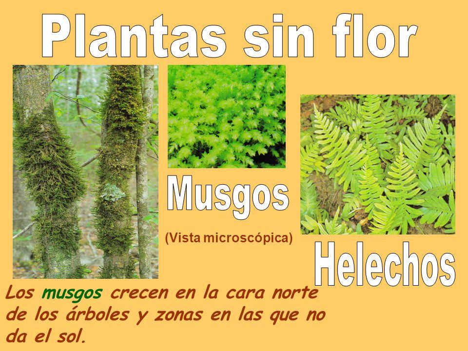 Las plantas clases de rboles clases el almendro de tallos for Cuales son los arboles perennes