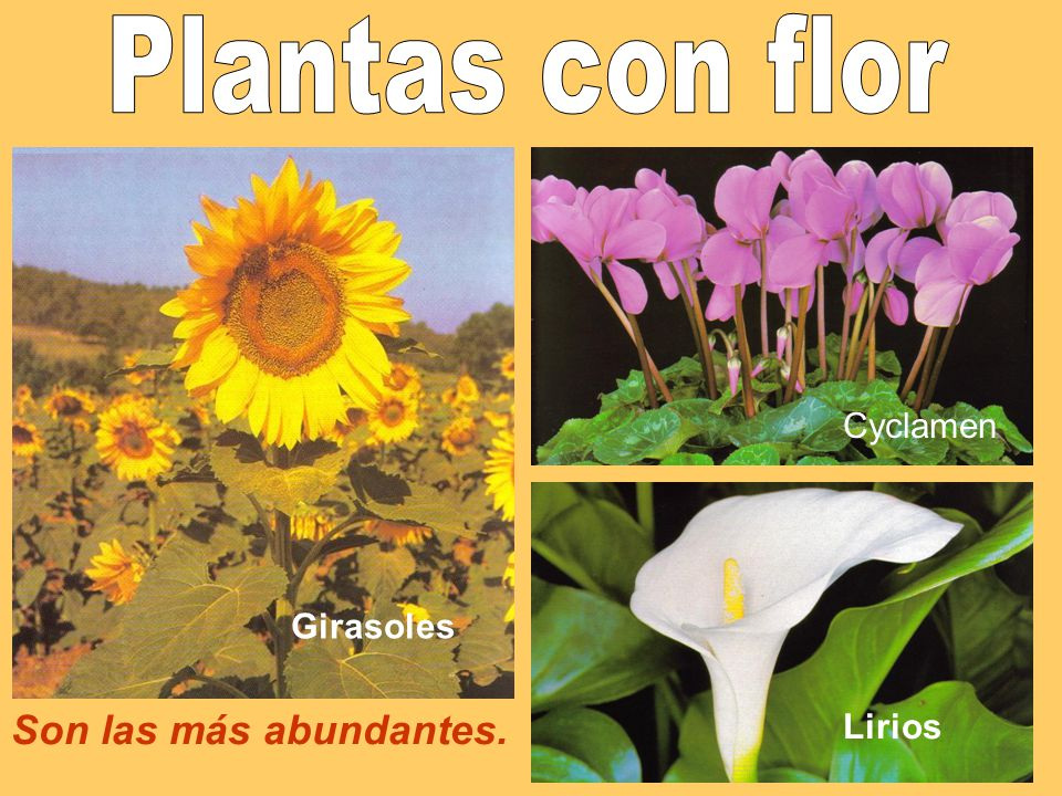 Las Plantas Clases De Arboles Clases El Almendro De Tallos Y El Pino
