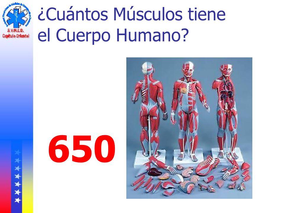 Anatomía Sistema Muscular Ppt Descargar