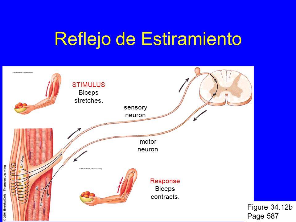 Integración y Control: Sistema Nervioso - ppt video online descargar
