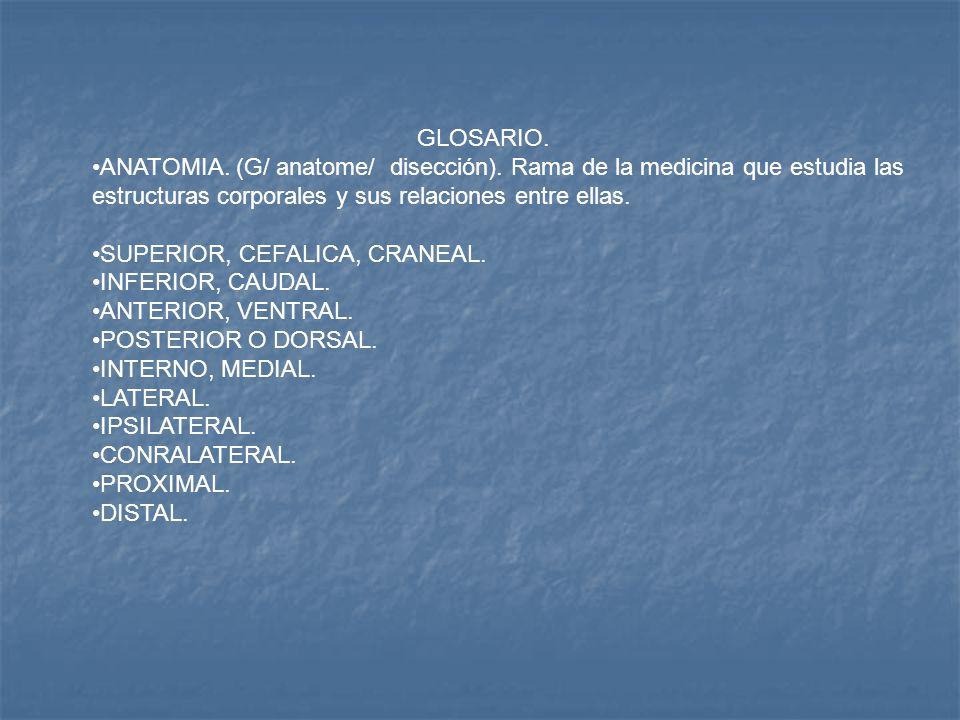 GLOSARIO. ANATOMIA. (G/ anatome/ disección). Rama de la medicina que ...