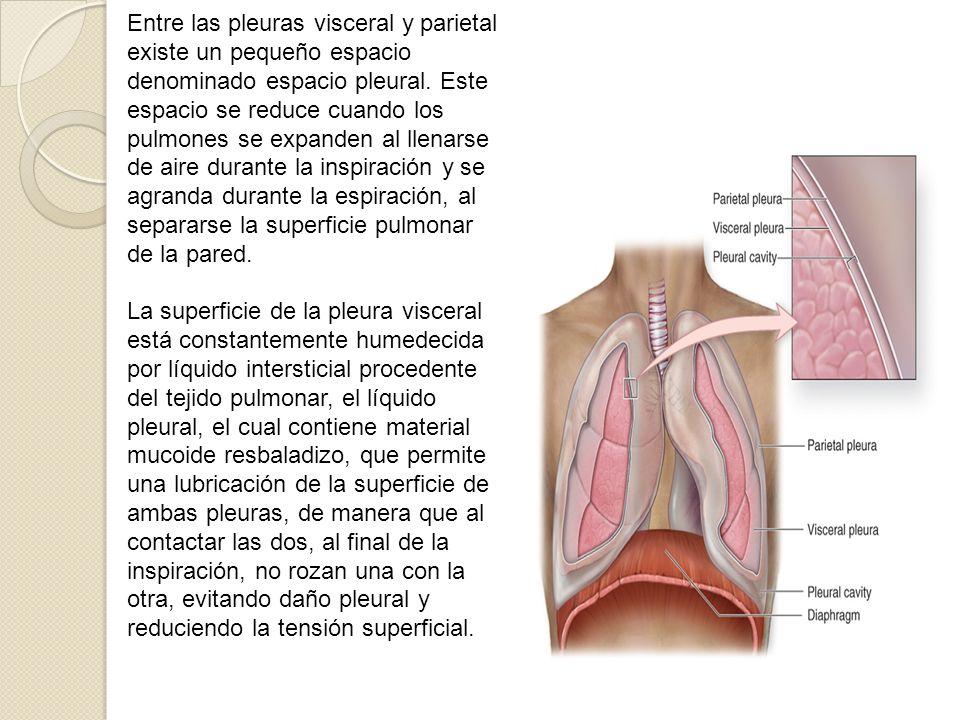 Enfermedad Pulmonar intersticial. - Neumotórax. Mariam Hassan - ppt ...