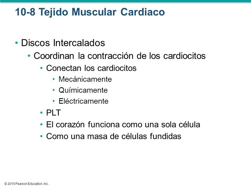 Capítulo 10 Tejido Muscular III Biol 3791 UPR – Aguadilla - ppt ...
