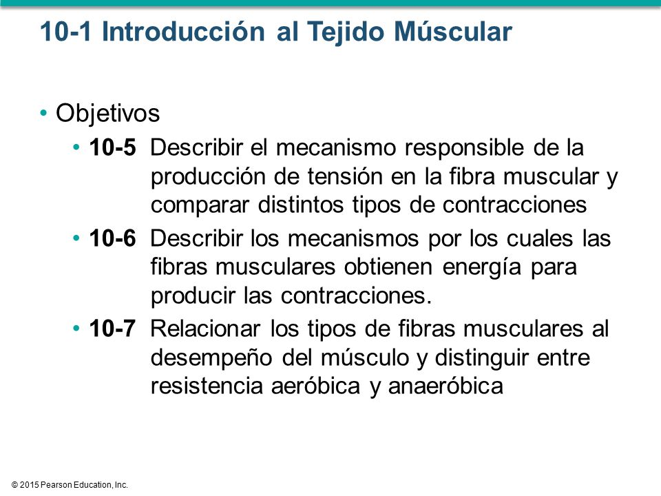Capítulo 10 Tejido Muscular I Biol 3791 UPR – Aguadilla - ppt video ...