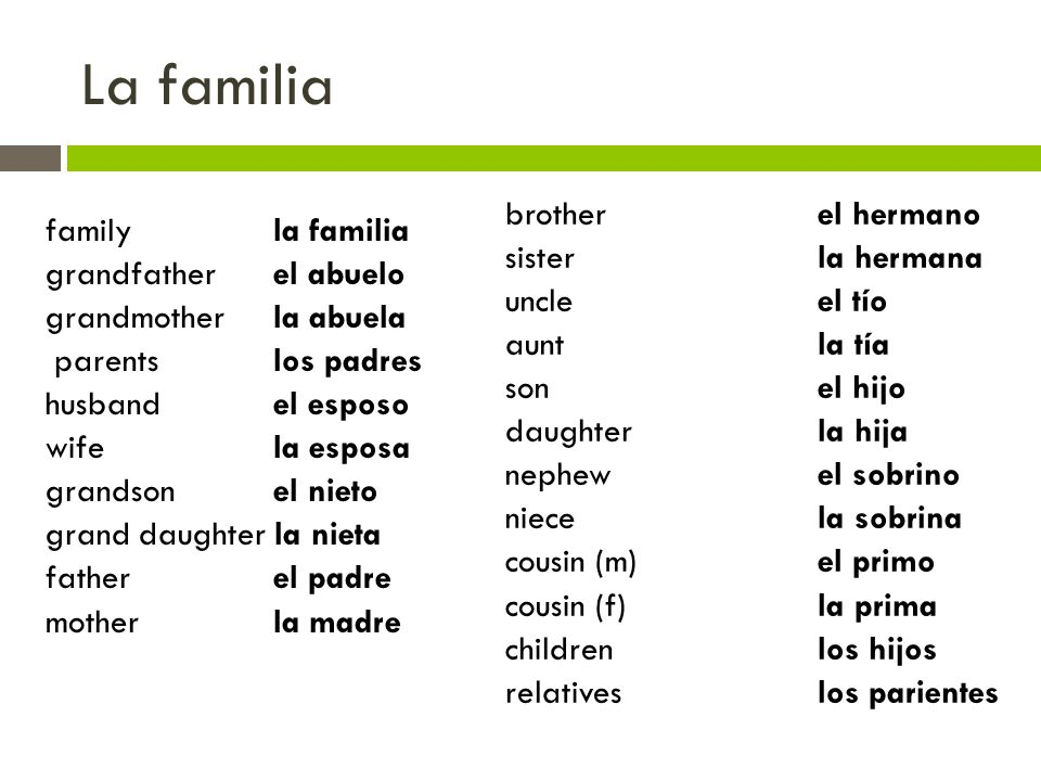 La familia brother el hermano family la familia sister la hermana
