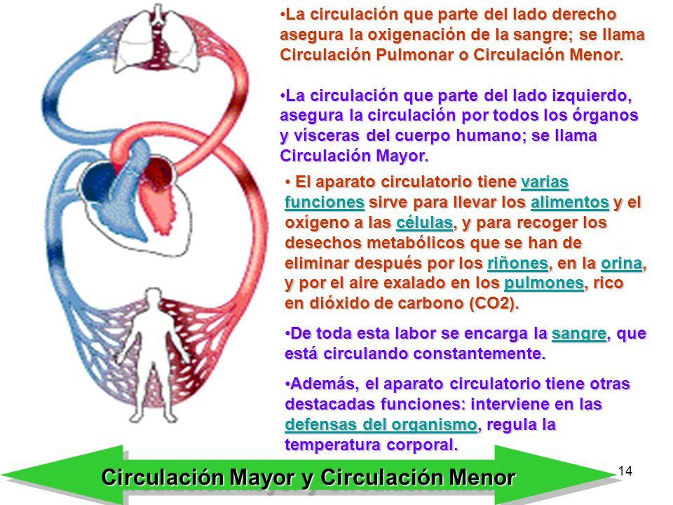 Bonito Imagen De Los órganos En El Lado Izquierdo Del Cuerpo ...