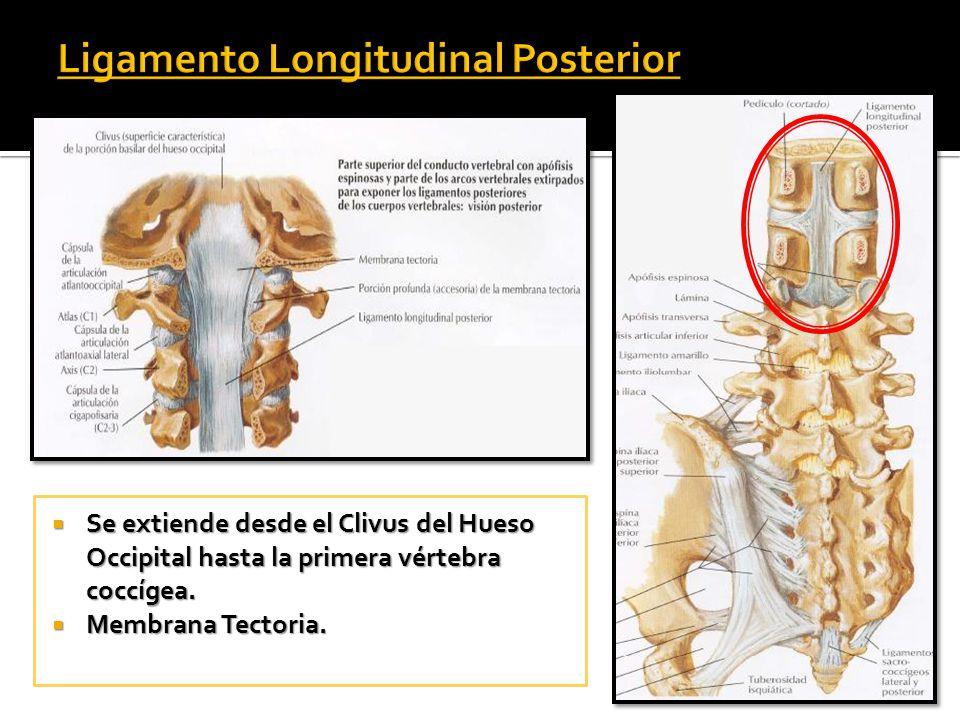 Artrología de la Columna Vertebral - ppt video online descargar