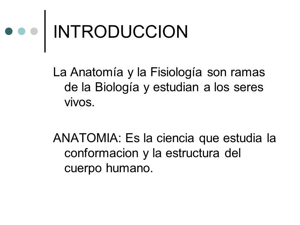 ANATOMIA Y FISIOLOGIA INTRODUCCIÓN. - ppt descargar