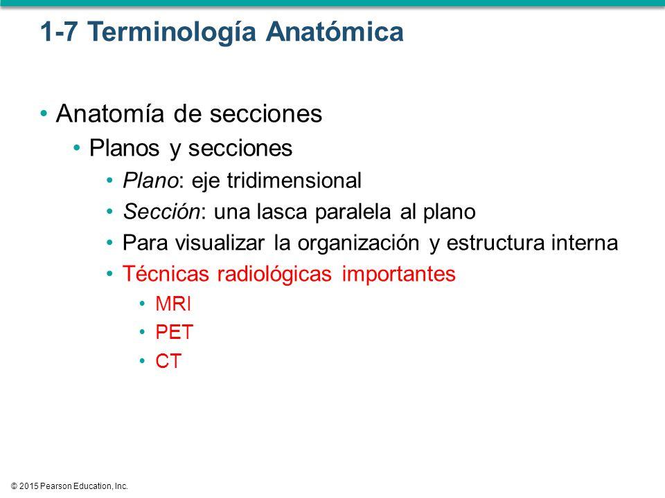 Introducción a Anatomía y Fisiología - ppt descargar