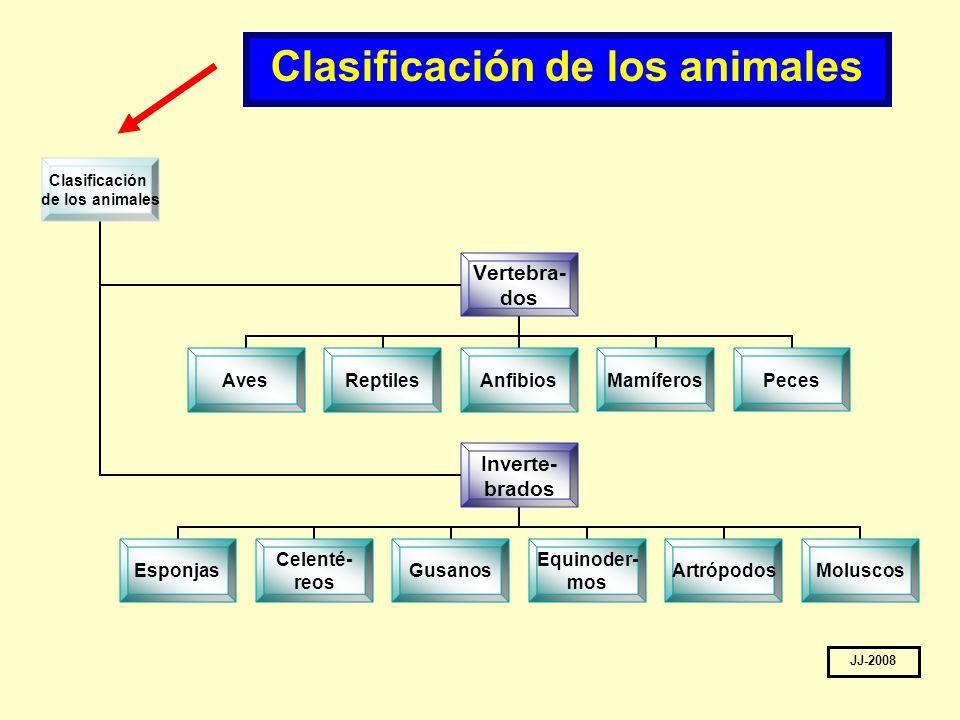 Resultat d'imatges de CLASIFICACIÓN DE LOS ANIMALES