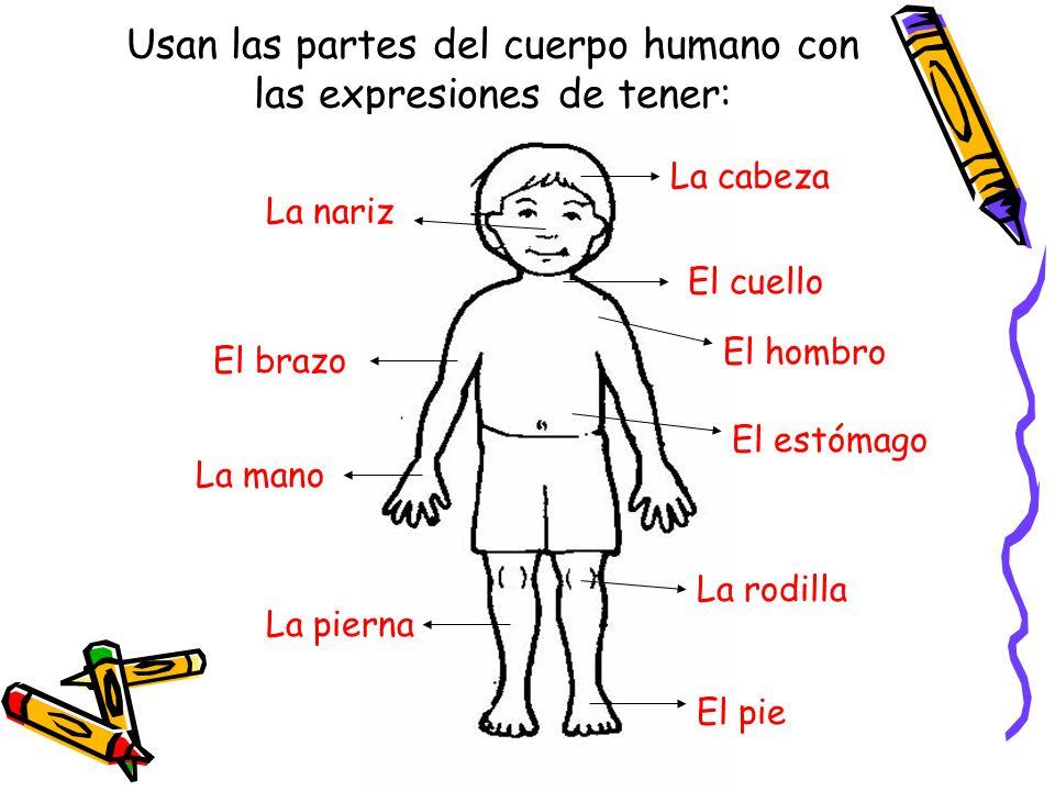 Perfecto Partes De Cuello Humanos Composición - Anatomía de Las ...