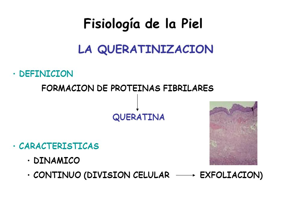 Fisiología del SNC Termorregulación - ppt video online descargar
