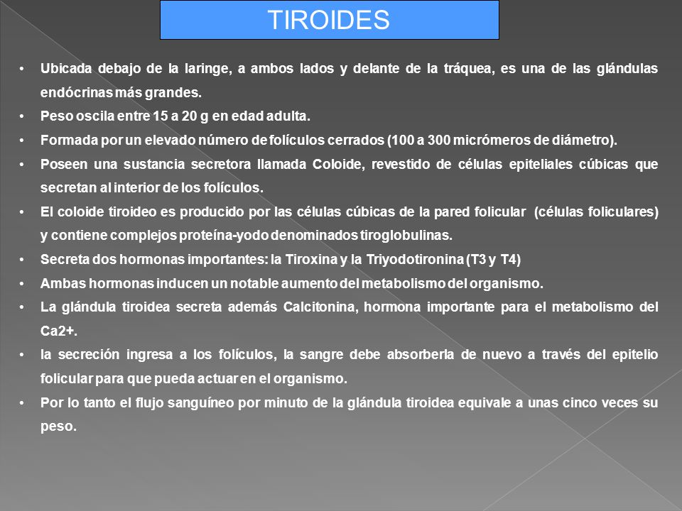 ANATOMÍA DE PÁNCREAS, TIROIDES Y SUPRARRENALES - ppt descargar