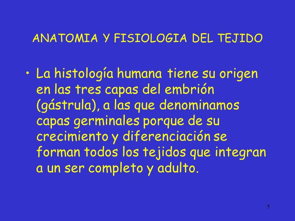 Bonito Anatomía Modelos Educativos Colección - Imágenes de Anatomía ...
