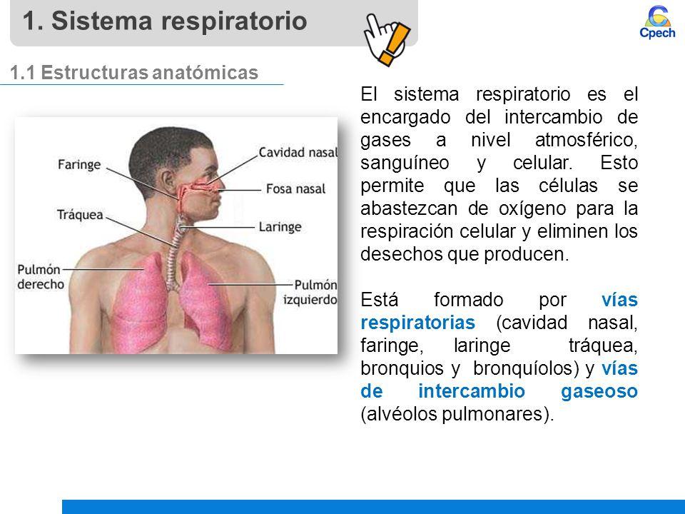 Pptcancbbla04024v4 Clase Sistema Respiratorio Ppt Video