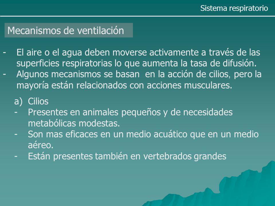 COMPARATIVO DE RESPIRACIÓN EN ANIMALES - ppt descargar