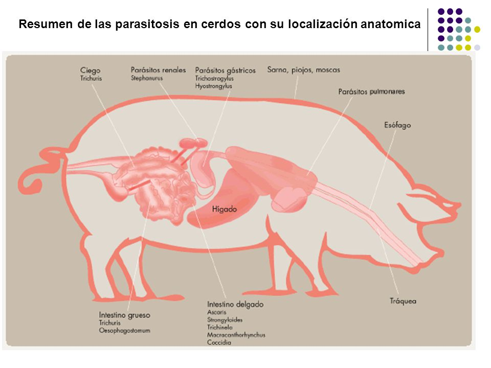 GASTRO ENTERITIS VERMINOSA EN PORCINOS - ppt video online descargar
