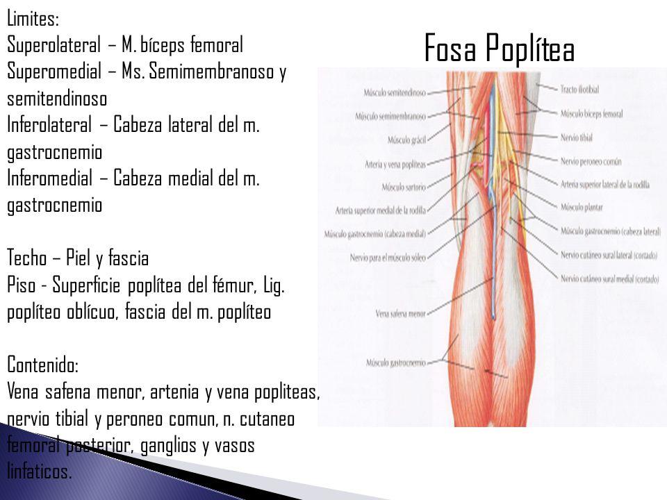 Moderno Ganglios Linfáticos Poplíteos Friso - Anatomía y Fisiología ...