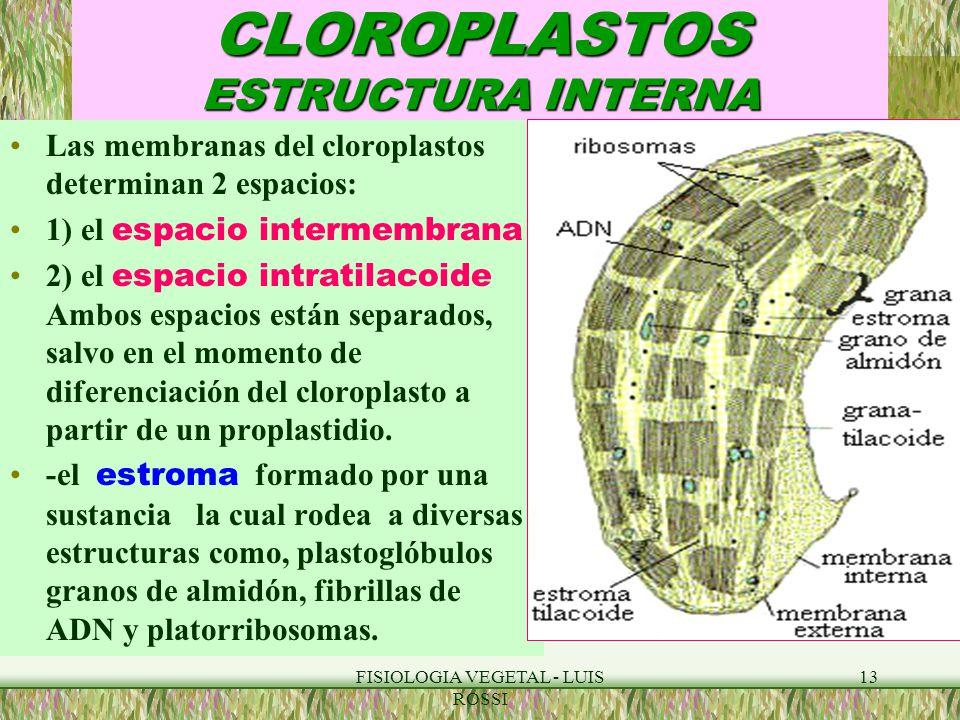 Fisiologia Vegetal Luis Rossi Ppt Video Online Descargar