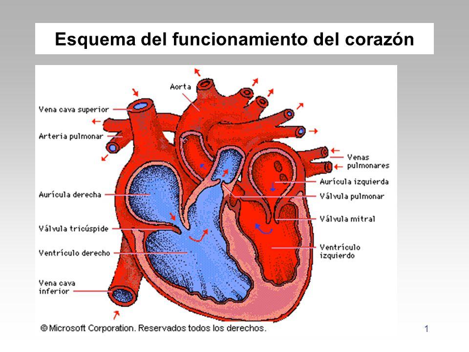 Esquema del funcionamiento del corazón - ppt descargar