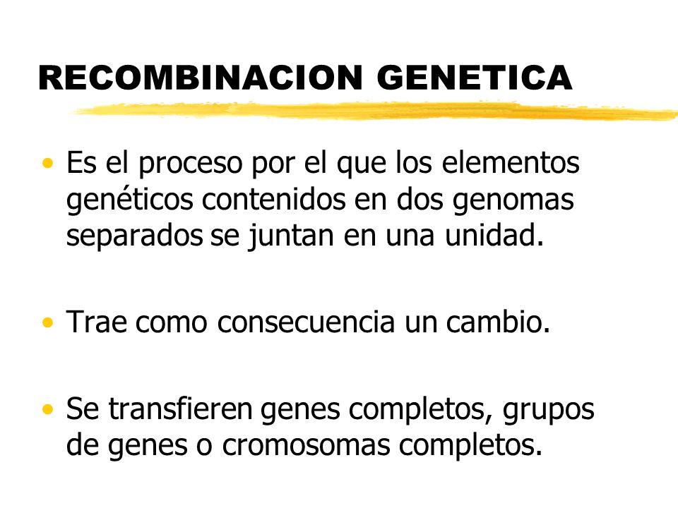 Recombinación genética.