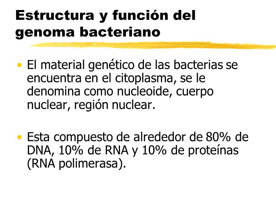 Genetica Bacteriana Curso De Microbiología I Ppt Video