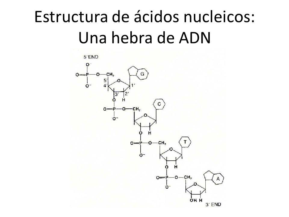 Acidos Nucleicos Estructura Y Función Ppt Descargar