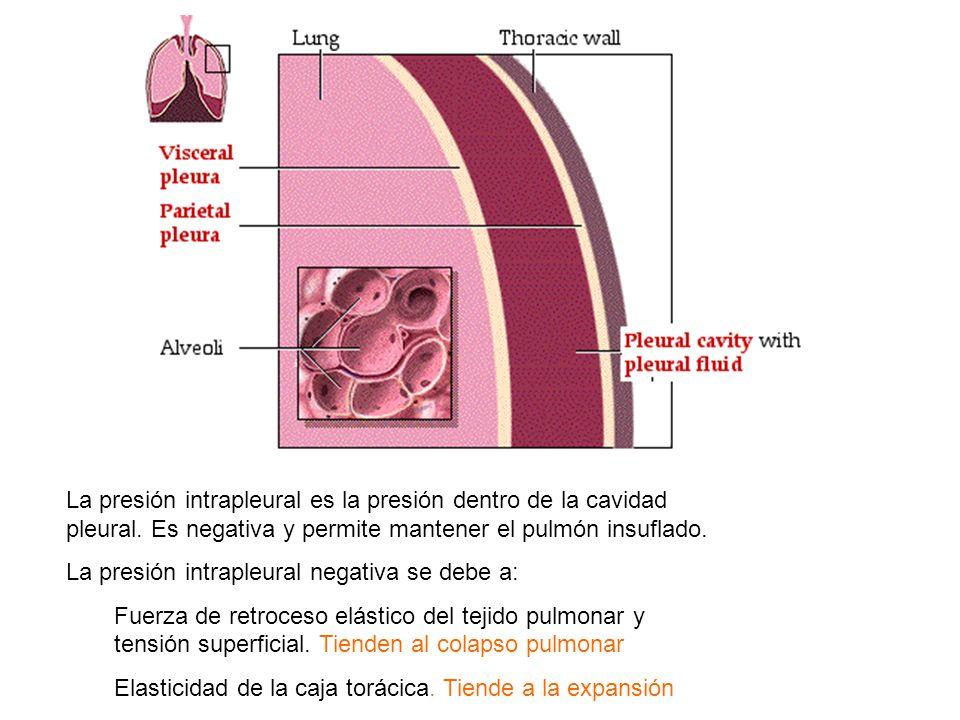 Función Sistema Respiratorio - ppt video online descargar