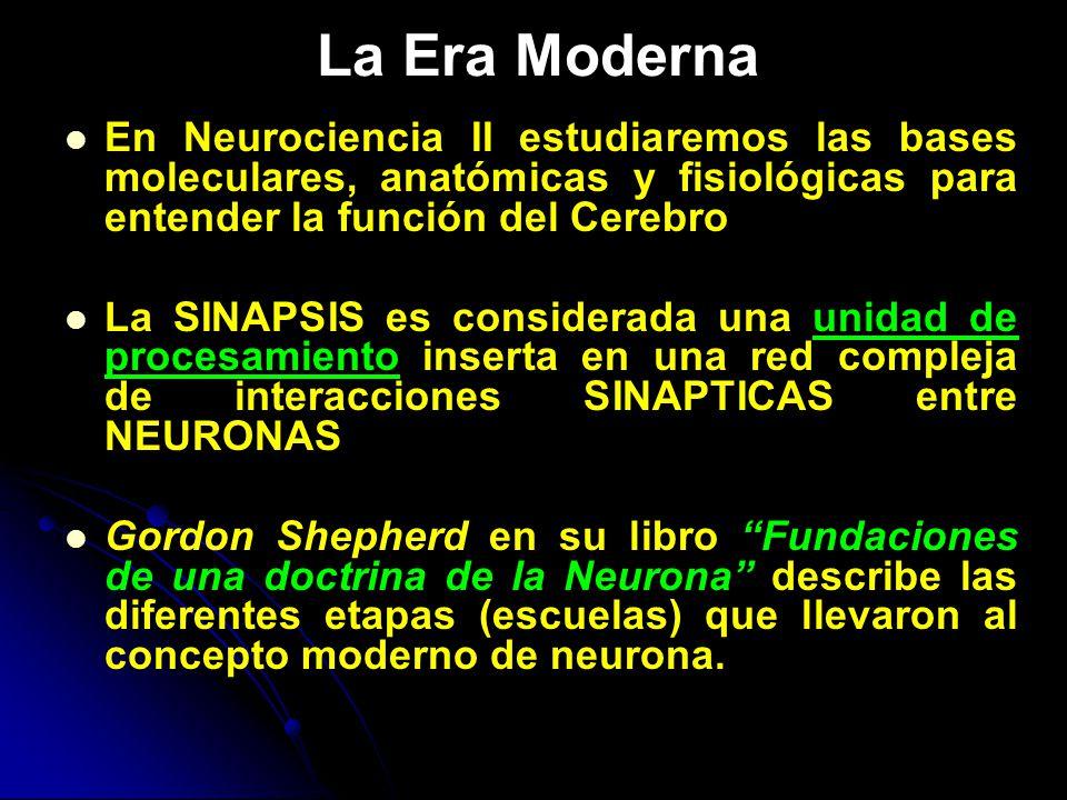 ORGANIZACION DEL SISTEMA NERVIOSO - ppt video online descargar