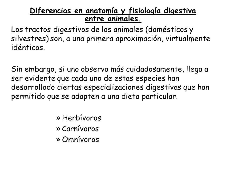 """Fisiología Digestiva"""" - ppt descargar"""