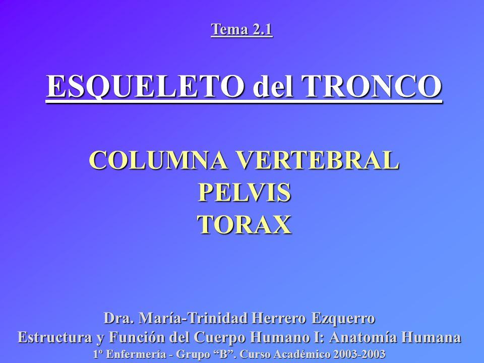 ESQUELETO del TRONCO COLUMNA VERTEBRAL PELVIS TORAX Tema ppt descargar