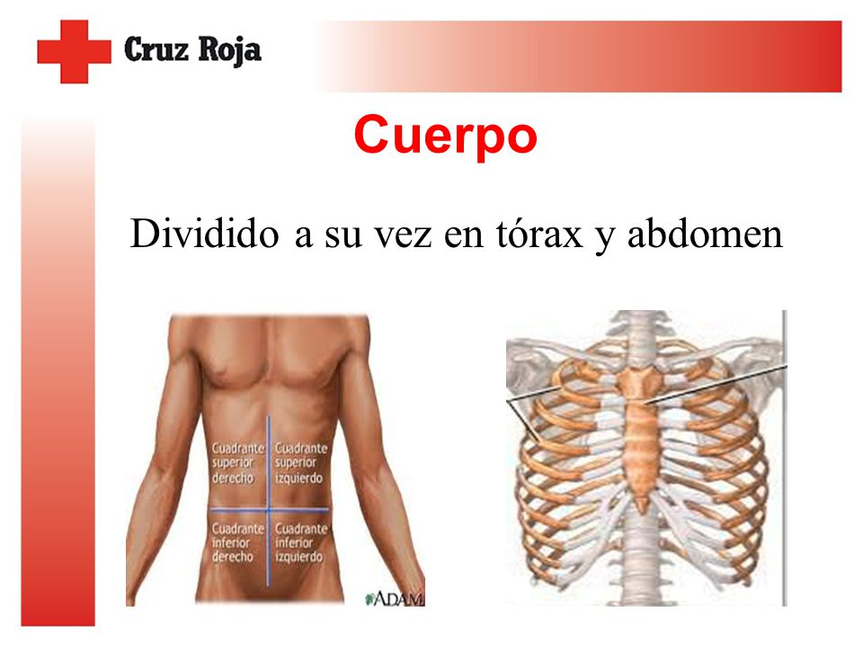 Anatomía básica. - ppt video online descargar