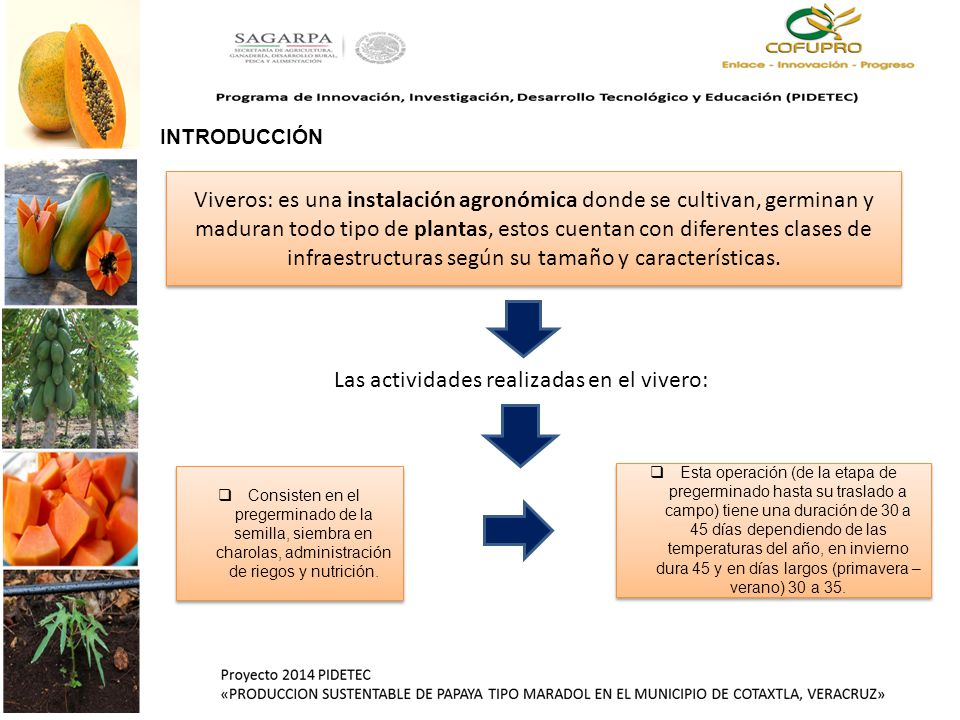 Programa de innovaci n investigaci n desarrollo for Caracteristicas del vivero