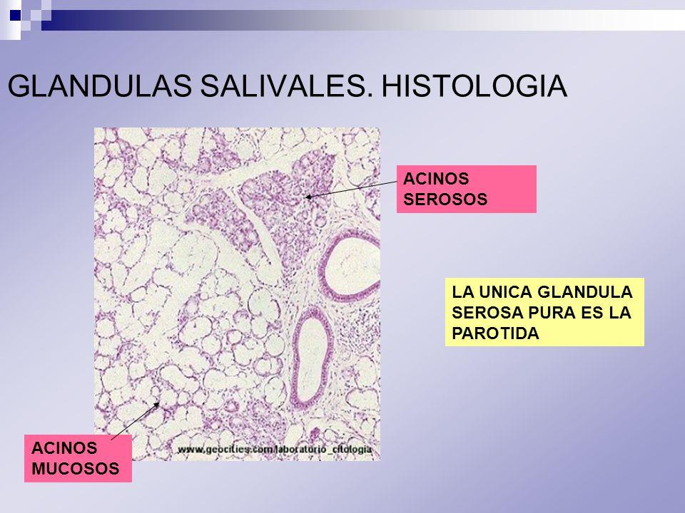 GLANDULAS ANEXAS DEL APARATO DIGESTIVO - ppt video online descargar