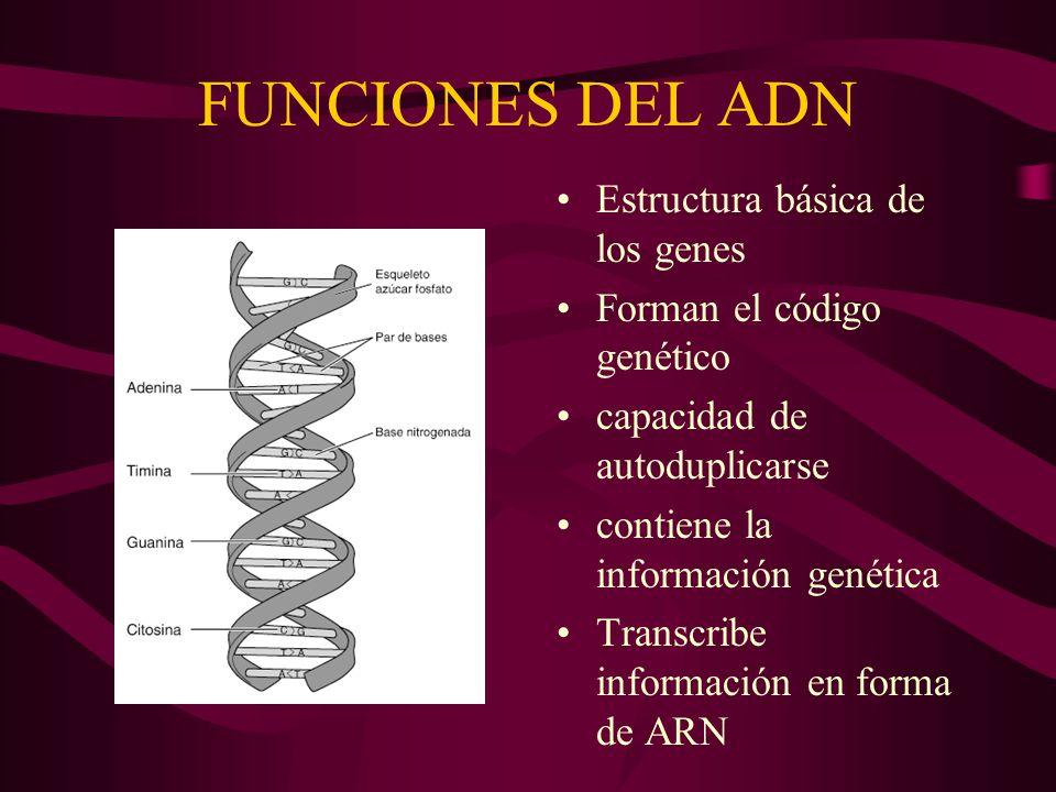 Moleculas Que Hablan Acidos Nucléicos Prof Patricia