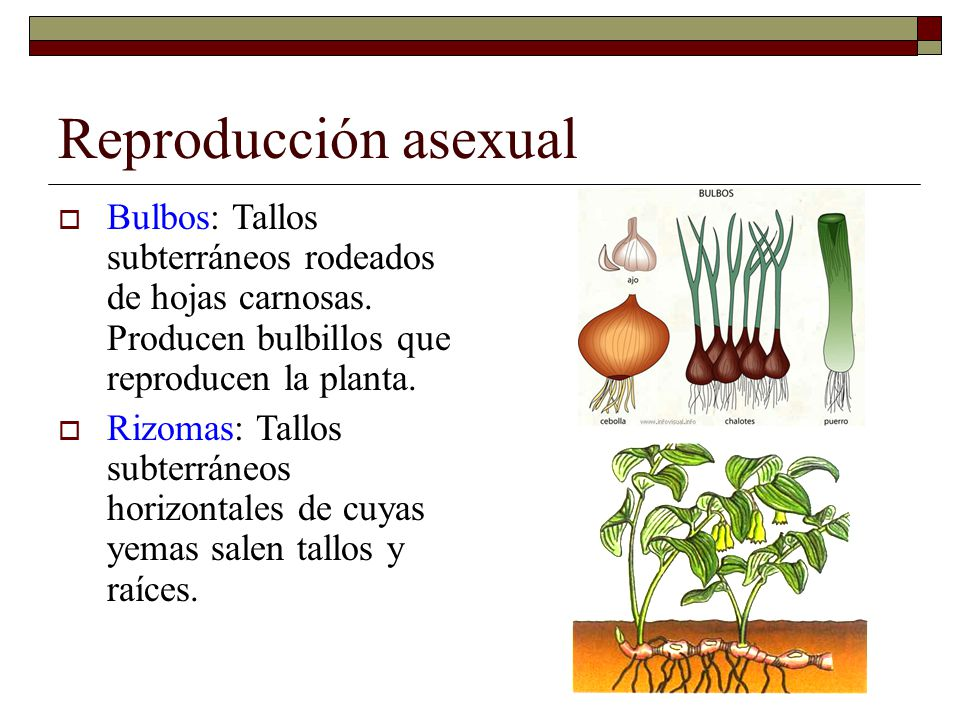 Reproduccion sexual y asexual de las plantas ppt