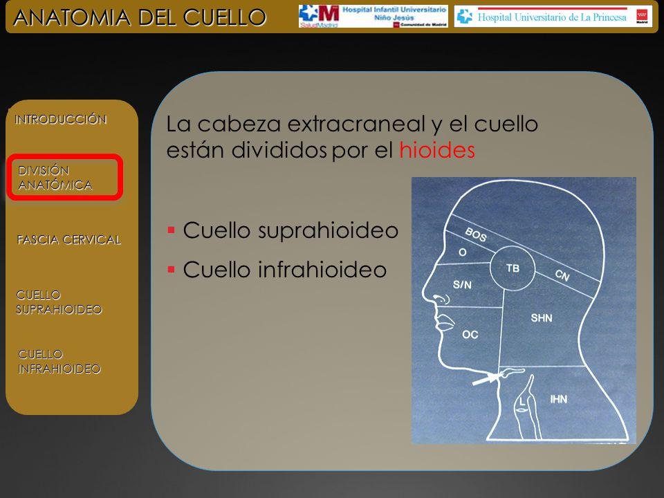 ANATOMIA DEL CUELLO INTRODUCCIÓN DIVISIÓN ANATÓMICA FASCIA CERVICAL ...