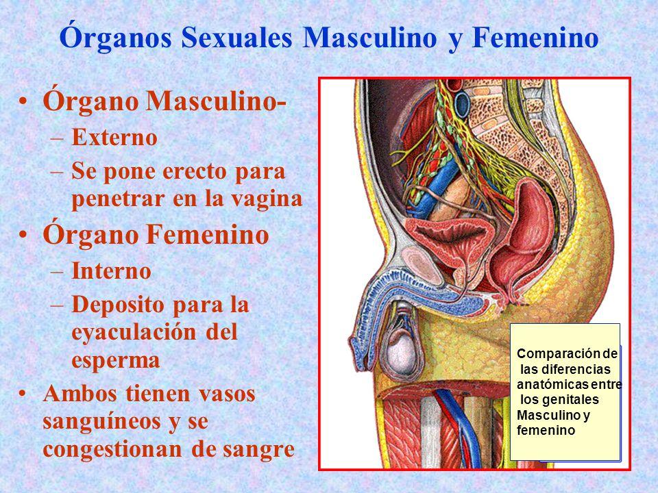 Increíble Anatomía Sexual Masculina Y Femenina Foto - Imágenes de ...