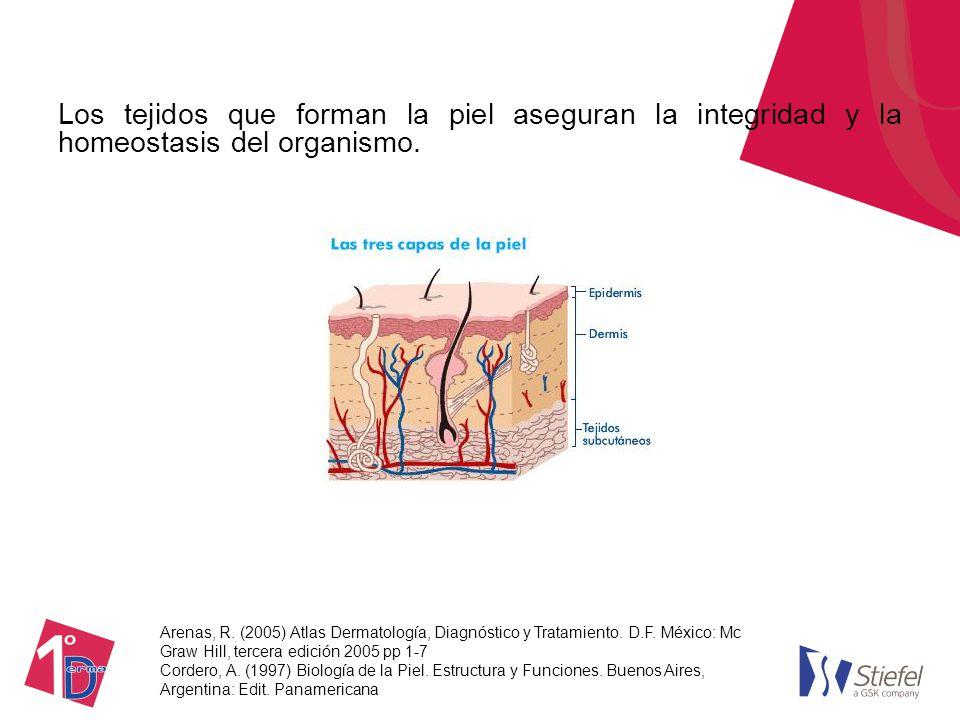Anatomía y Fisiología de la piel - ppt video online descargar