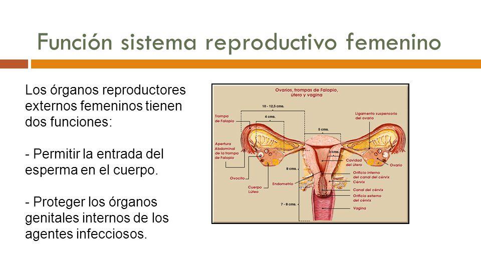 Dra. Amarilys Morales Rivera, PhD - ppt descargar