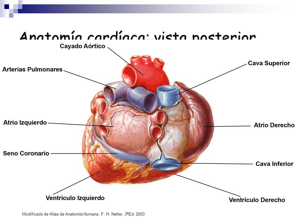 Corazón: anatomía y función - ppt descargar