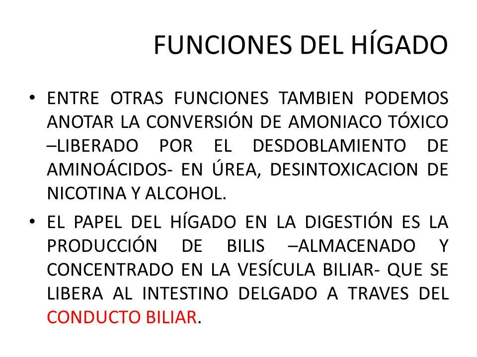 FUNCIONES DEL HÍGADO UNIDAD ppt video online descargar