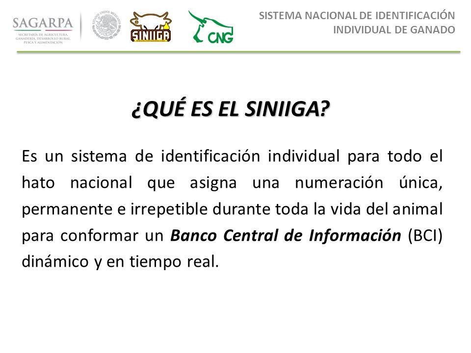 7b64854202de 2 SISTEMA NACIONAL DE IDENTIFICACIÓN INDIVIDUAL DE GANADO ¿QUÉ ...
