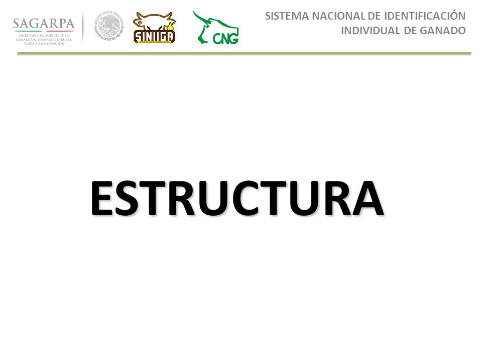 0dfc867c712f 5 SISTEMA NACIONAL DE IDENTIFICACIÓN INDIVIDUAL DE GANADO ESTRUCTURA