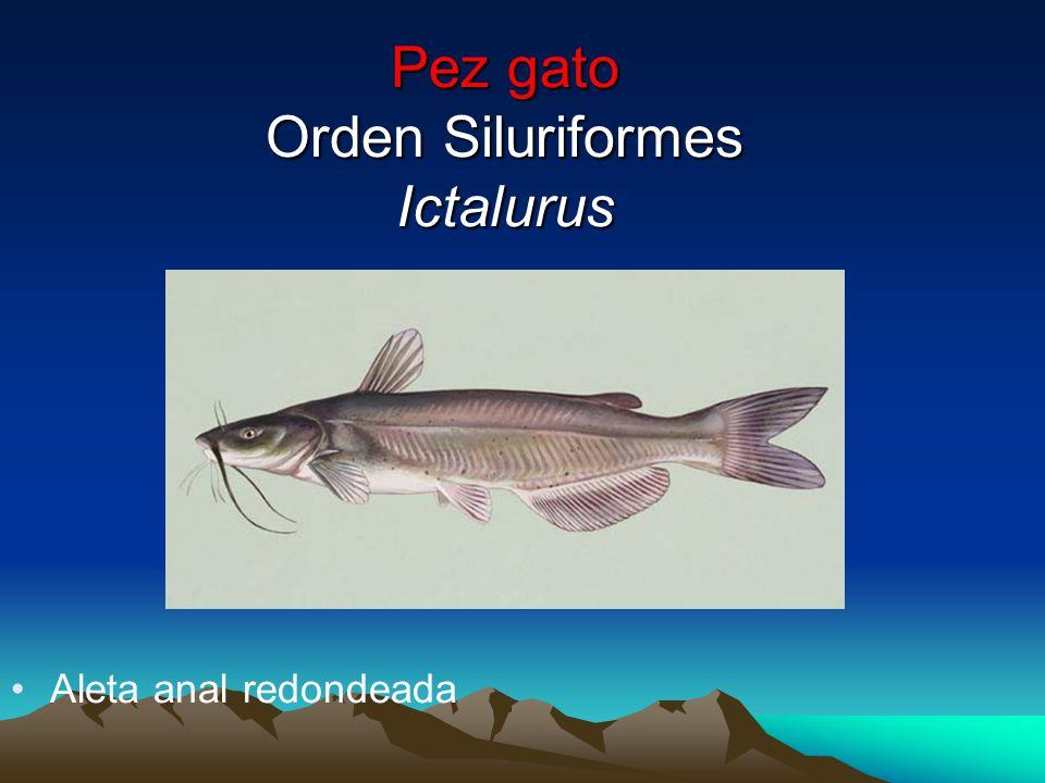 PECES ÓSEOS (ICTIOLOGÍA) - ppt video online descargar