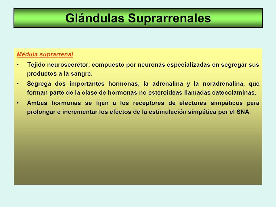 Sistema Endócrino Tiroides-Páncreas- Suprarrenales - ppt descargar