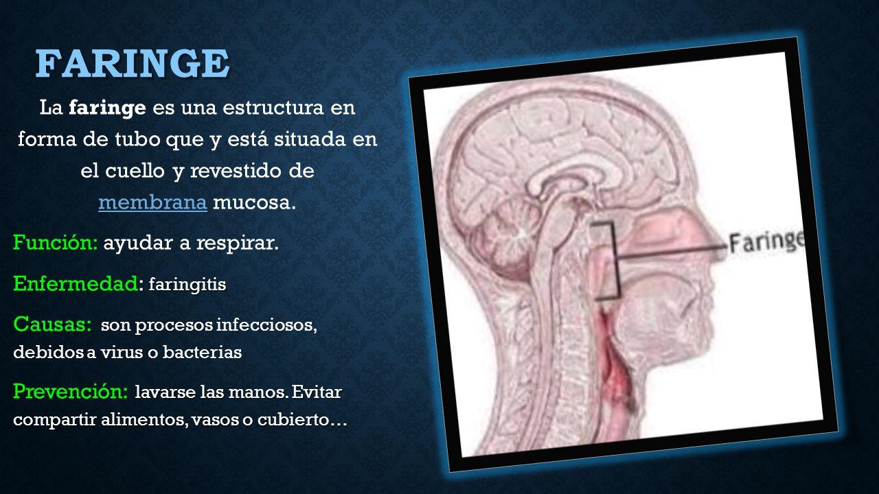 Eliezer Santiago Heredia - ppt descargar