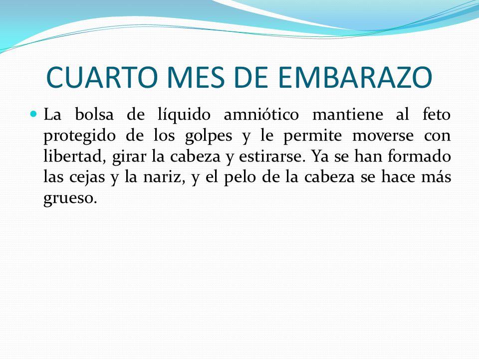 EL EMBARAZO. - ppt descargar